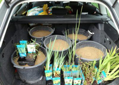 Wahlfach Gartenteich